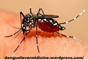 dengue fever medicine